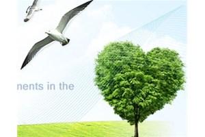 防腐木景观的未来发展优势和发展特点!